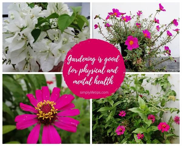 Flowers Gardening