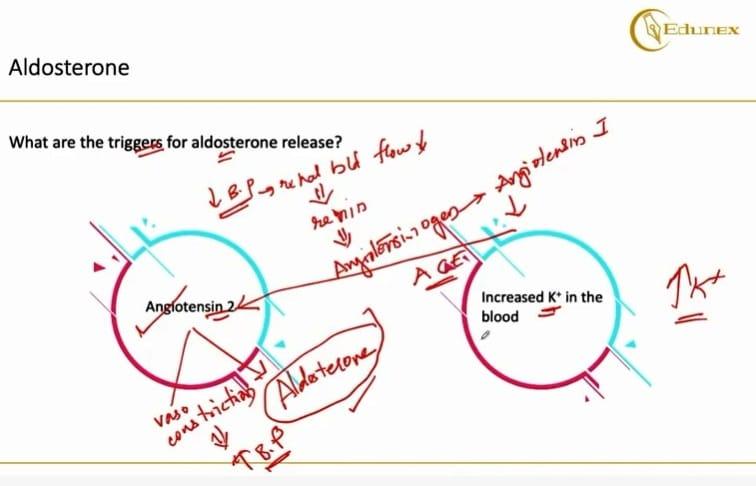 Primary hyperaldosteronism Triggers for aldosterone release