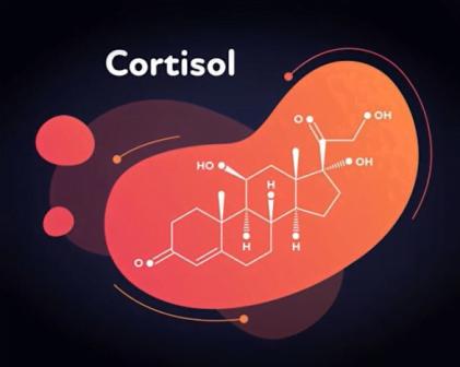 decrease belly fat Cortisol hormone